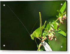 Grasshopper #1 Acrylic Print