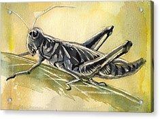 Grasshopper Acrylic Print by Alfred Ng