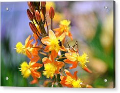 Grasshopper And The Bee Acrylic Print by Ashley Fortier