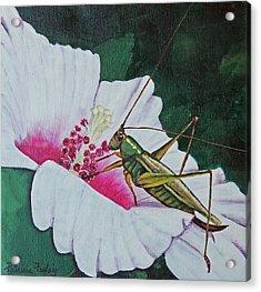 Grasshopper Acrylic Print by Patricia Pasbrig