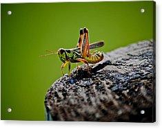Grasshopper Acrylic Print by Swift Family