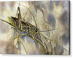 Grasshopper Watercolor Acrylic Print