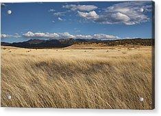Grassland Expanse Acrylic Print by Gregory Scott