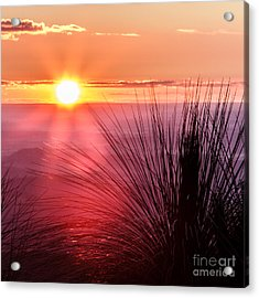 Acrylic Print featuring the photograph Grasstree Sunset by Peta Thames