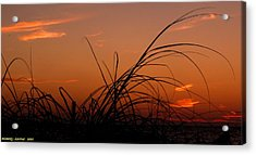 Grassy After Glow Acrylic Print by Richard Zentner