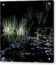 Grassy Lights Acrylic Print