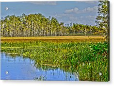 Grassy Waters Acrylic Print