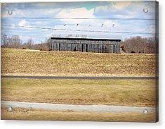 Gray Barn In A Cornfield Acrylic Print by Paulette B Wright