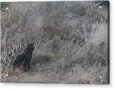 Acrylic Print featuring the photograph Gray Cat by Alicia Knust