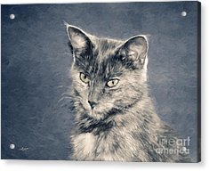 Gray Cat Acrylic Print by Jutta Maria Pusl