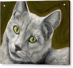Gray Cat With Green Eyes Acrylic Print by Amy Reges