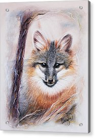 Gray Fox Acrylic Print