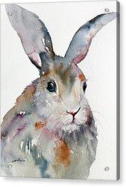 Gray Hare Acrylic Print