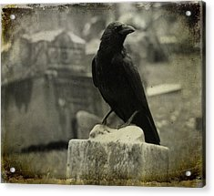 Gray Rainy Day Raven In Graveyard Acrylic Print by Gothicrow Images