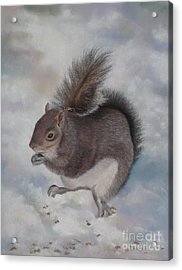 Gray Squirrel Acrylic Print by Jackie Hill