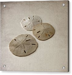 Gray Taupe And Beige Sand Dollars Acrylic Print by Brooke T Ryan