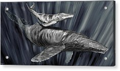 Gray Whales Acrylic Print