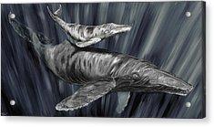 Gray Whales Acrylic Print