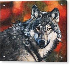 Gray Wolf Acrylic Print by Joshua Martin
