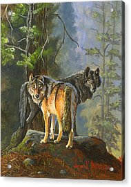 Gray Wolves Acrylic Print by Jeff Brimley