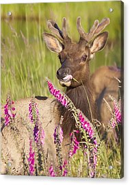 Acrylic Print featuring the photograph Grazing At Dusk - Cropped by Todd Kreuter