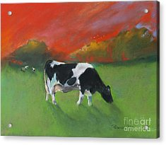 Grazing Cow Acrylic Print
