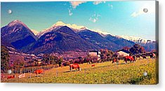 Acrylic Print featuring the photograph Grazing Cows 2 by Giuseppe Epifani