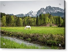 Grazing Horse In Pasture In Bavarian Acrylic Print