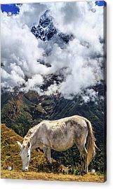 Grazing Horse, Sagarmatha National Acrylic Print