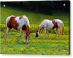 Grazing Horses 001 Acrylic Print by George Bostian