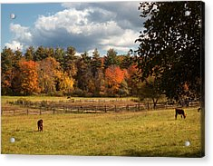 Grazing On The Farm Acrylic Print by Joann Vitali