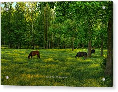 Grazing Acrylic Print by Paul Herrmann