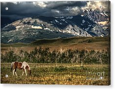 Grazing The Cutback Acrylic Print by The Stone Age