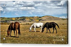 Grazy Day Acrylic Print by Claudette Bujold-Poirier