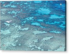 Great Barrier Reef From The Air Acrylic Print