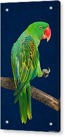 Great-billed Parrot 1 Acrylic Print