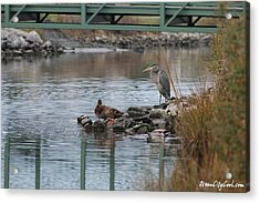 Acrylic Print featuring the photograph Great Blue Heron And Friends by Robert Banach