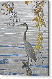 Acrylic Print featuring the photograph Great Blue Heron by Ann Horn
