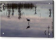 Great Blue Heron At Sundown Acrylic Print