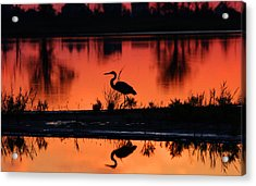 Great Blue Heron At Sunrise Acrylic Print by Allan Levin