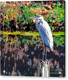 Great Blue Heron At The Pond Acrylic Print