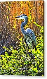Great Blue Heron Acrylic Print by Dennis Cox WorldViews