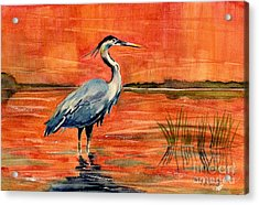 Great Blue Heron In Marsh Acrylic Print by Melly Terpening
