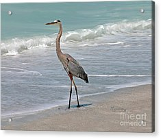 Acrylic Print featuring the photograph Great Blue Heron On Beach by Mariarosa Rockefeller