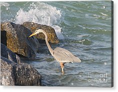 Great Blue Heron On The Prey Acrylic Print by Christiane Schulze Art And Photography