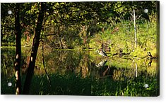 Great Blue Heron Reflecting Acrylic Print by James Hammen