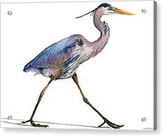 Great Blue Heron Strolling Acrylic Print by Carlo Ghirardelli