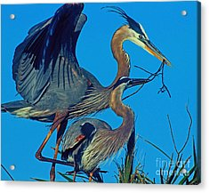 Acrylic Print featuring the photograph Great Blue Herons - Nest Building by Larry Nieland