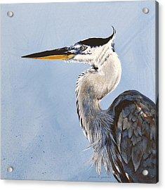 Great Blue II Acrylic Print