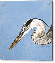 Great Blue Tyler Acrylic Print